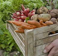 Crate of Vegetables