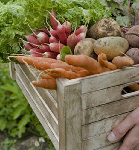 野菜バスケット