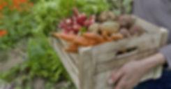 Растительная корзина