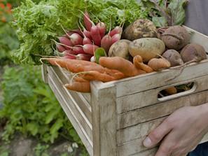 Os alimentos biológicos são realmente mais saudáveis?