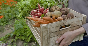 Gemüsekorb