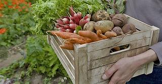 cesta vegetal