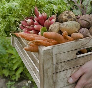 Cesta de vegetais e legumes