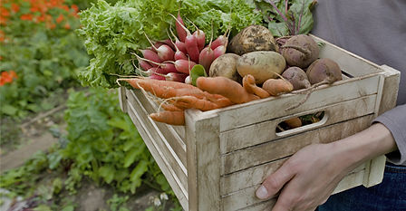 エッコ ディ ピュ,Ecco di più,江別,イタリアン,イタリア料理,パスタ,ランチ,無農薬野菜,有機野菜,産地直送