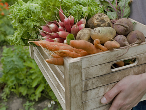 The At Home Grocery Store- Harvesting & Storing Your Own Produce