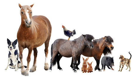 group of farm animals in front of white
