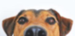 Cute P-TEX Dog