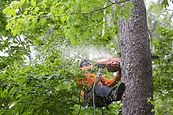 tree removal 2.jpg
