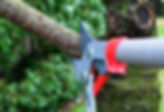 tree-trimming.jpg