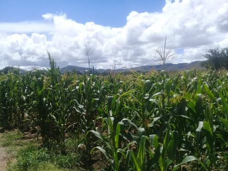 Viviendo la pandemia en el Bachillerato Integral Comunitario No. 46 de Coatecas Altas