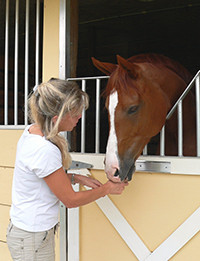 Person feeding a horse over a stall door