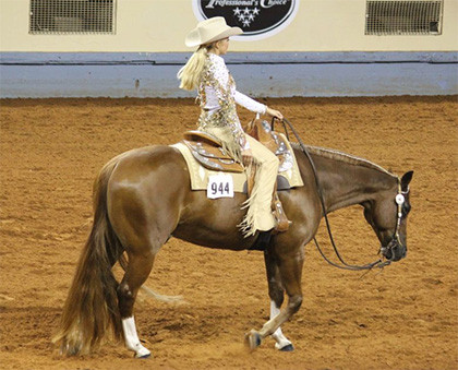 Western pleasure horse and rider