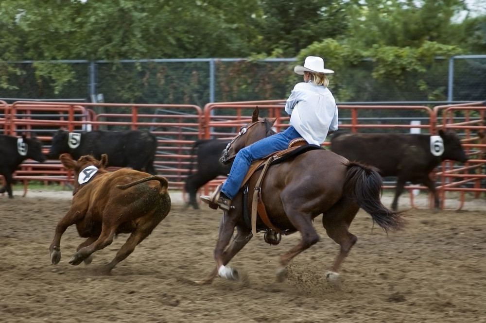 Horse and rider chasing down a cow