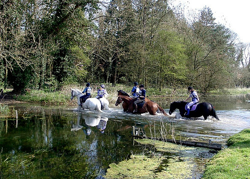 A group of horses crossing a river