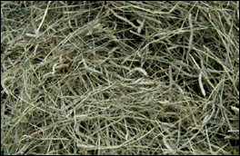 Mature grass hay with seed heads