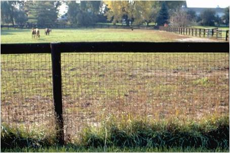 Wooden fence with mesh