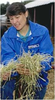 Person analyzing hay quality