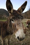 Donkey head view
