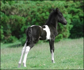 Young foal with good hair coat