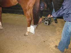 Horse getting a X-ray done