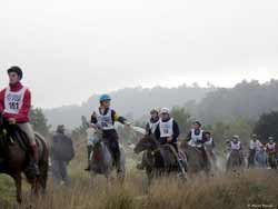 Riders and horses during a competitive trail ride
