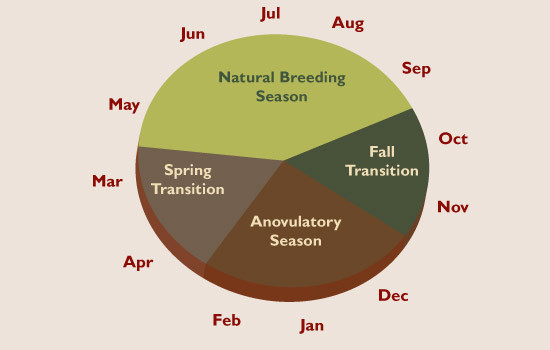 A horse's natural breeding season is from late April until mid September