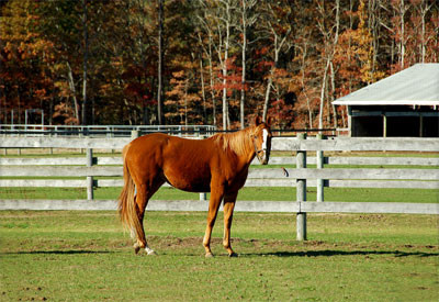 Horse standing in a pasture