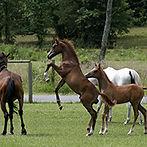 foal_dam.jpg