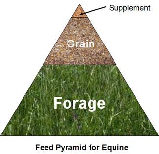Traingle representing the feed pyramid of horses