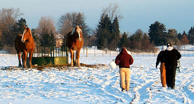 Horses turned out in winter pasture