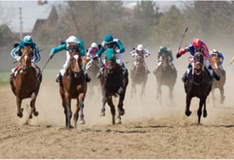 Thorougbreds racing
