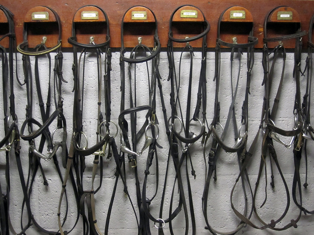 Bridles hanging in a tack room