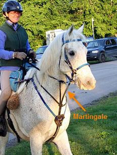 Horse is wearing a martingale