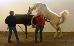Breeding the Mare: Factors That Can Influence Conception Rates