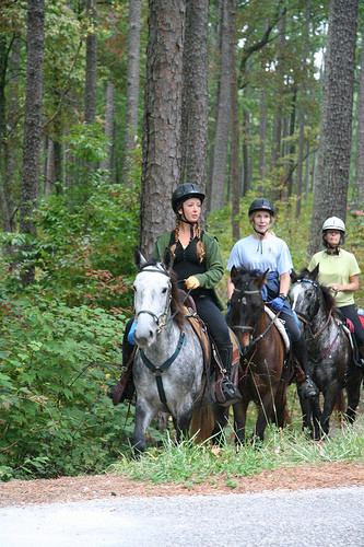 Trail riding in a forest with friends