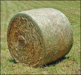 Round bale wrapped with netting