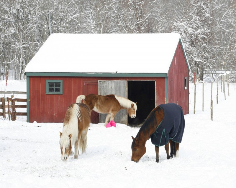 Three horses in a snowy pasture