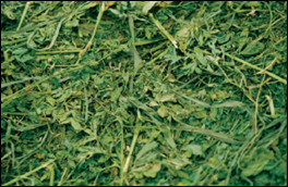 Alfalfa/grass hay mix