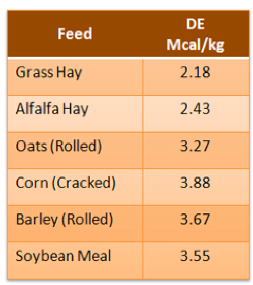 Digestible energy from varying feedstuffs in a horse's diet