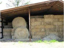 Hay being stored in an open barn