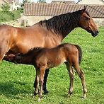 nursing_foal.jpg