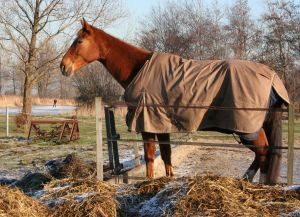 Horse wearing two blankets while standing in a pasture