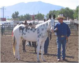 Mule at a show