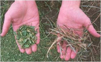 Comparison between alfalfa leaves and grass leaves