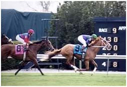 Thoroughbreds during a race