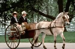 Halflinger horse pulling a cart