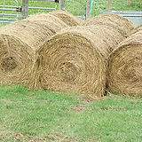may2013-hay.jpg