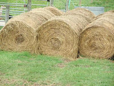 Round bales