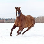 horse-winter.jpg