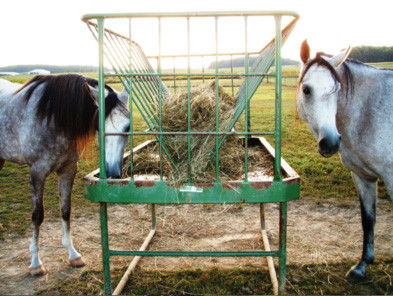 Two horses eating from a hay feeder